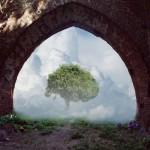 DP - Rajskie drzewo - Steblewo